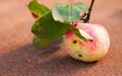 Are You a Leader Who Eats Wormy Apples?