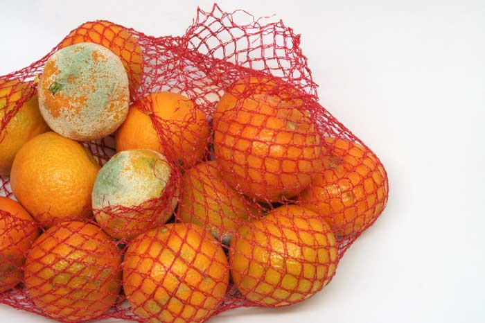 What Moldy Oranges Can Teach You About People and Company Culture